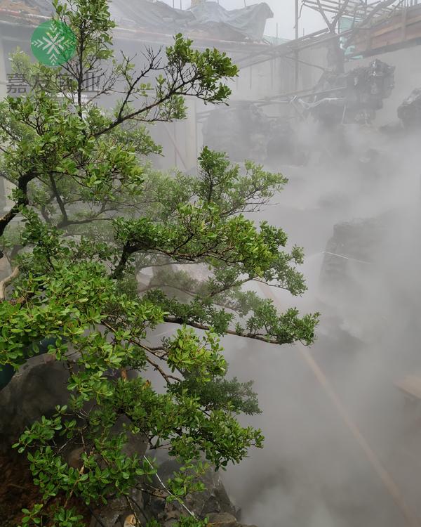"""杭州嘉友""""雾王""""雾森系统应用假山造雾项目案例"""