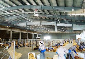 雾王为四川攀枝花烟草公司提供烟叶工厂仓库喷雾加湿系统方案